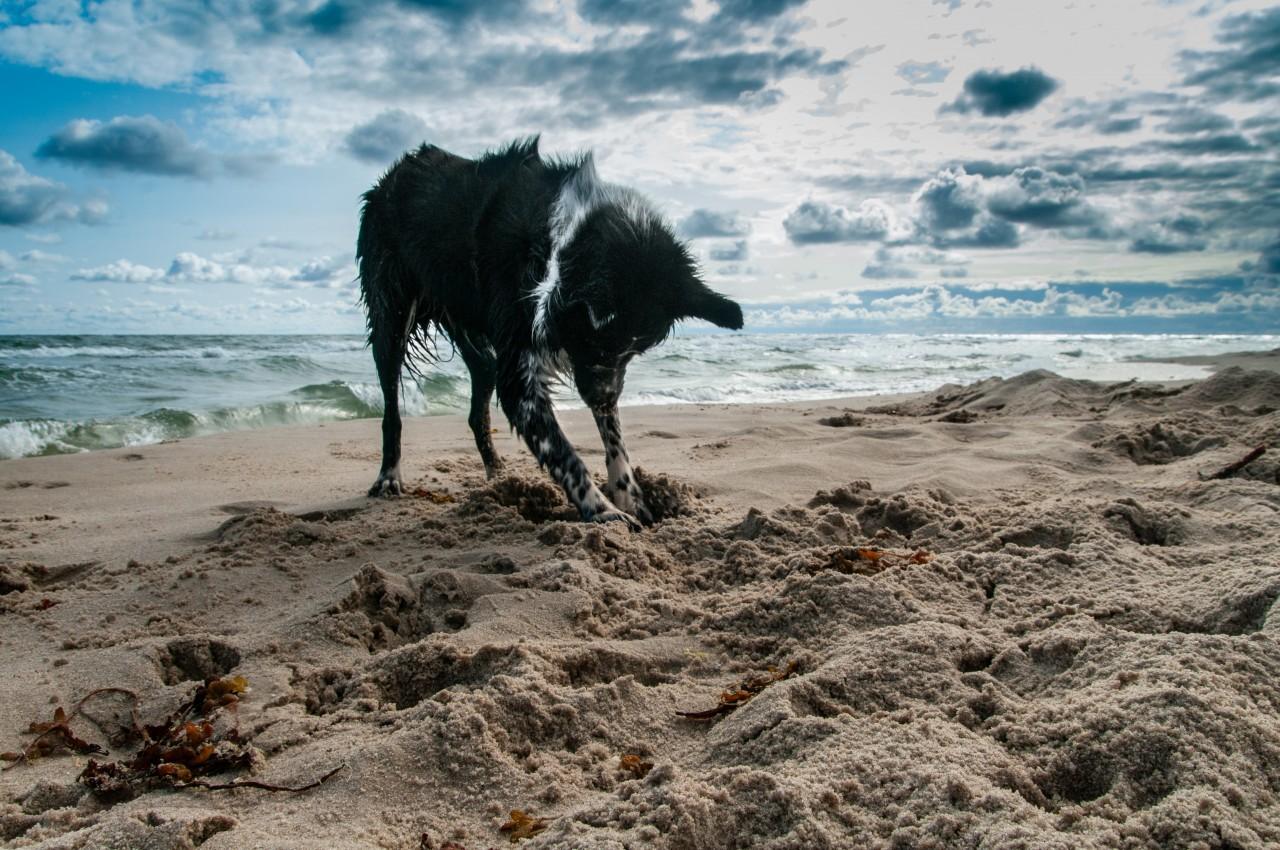 Wakacje w DOG UNIFURSITY - RABAT 15%